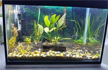 Aquariums for sale 28x44x29cms